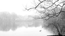 Fog In Central Park
