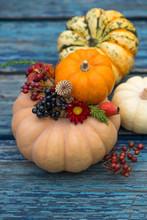 Little Pumpkins On Blue Wooden Background