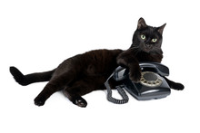 Black Cat And Retro Black Phon...
