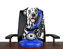 Cute Dalmatian Dog Is Talking By Blue Old Dial Telephone. Isolated On White