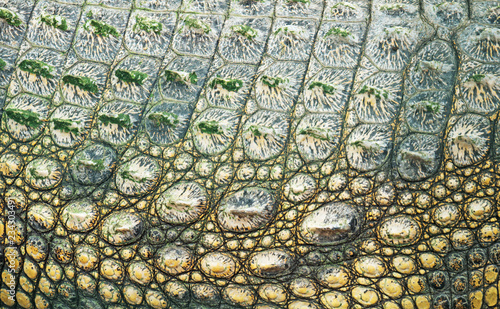 Keuken foto achterwand Krokodil Close-up view of Crocodile skin in national zoo.