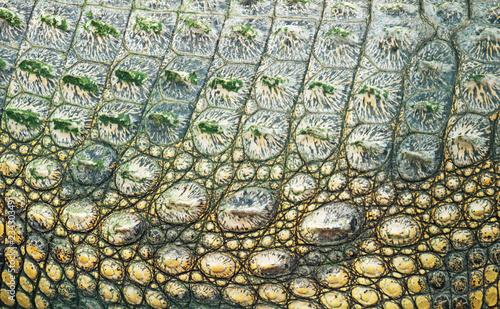 Deurstickers Krokodil Close-up view of Crocodile skin in national zoo.