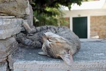 Young Grey Cat Resting Sleepin...