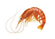 Fresh Boiled Tiger Shrimp Isolated On White