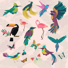 Tropical Set With Tropical Birds And Butterfly For Wallpapers, Web Page Backgrounds, Surface Textures, Textile, Wedding Invitation, Business Products
