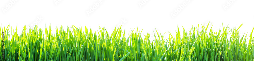 Fototapety, obrazy: grass isolated on white background