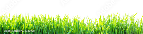 Fotografía  grass isolated on white background