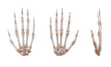 Human Hand Skeleton Bones Isolated On White, Lateral And Anterior Projection. Educational Medical Illustration. 3D Illustration