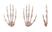 Human Hand Skeleton Bones Isol...