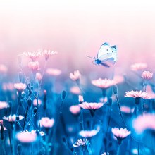 Pale Pink Forest Flowers And Butterfly On A Background Of Blue Leaves And Stems. Artistic Natural Macro Image. Concept Spring Summer. Wild Flowers.