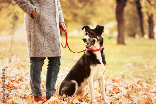 Foto  Beautiful dog near owner in autumn park