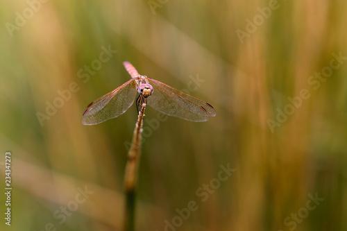 Photo Libélula posada en una rama