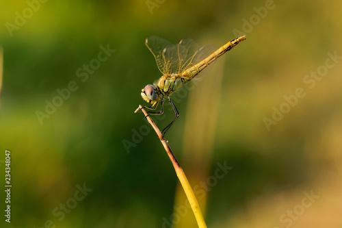 Fotografía  Libélula posada en una rama