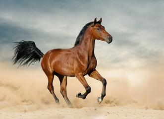 Purebred colt in prairies