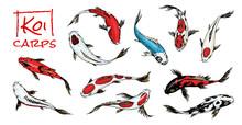 Set Of Koi Carps, Japanese Fish On White Background. Colored Korean Animals. Sea Creature. Engraved Hand Drawn. Vintage Tattoo Monochrome Sketch.
