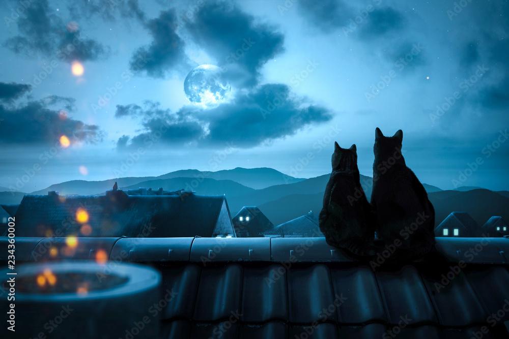 Fototapeta Zwei Katzen sitzen nachts auf einem Dach