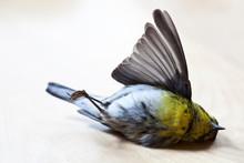 Dead Bird Lying On Back