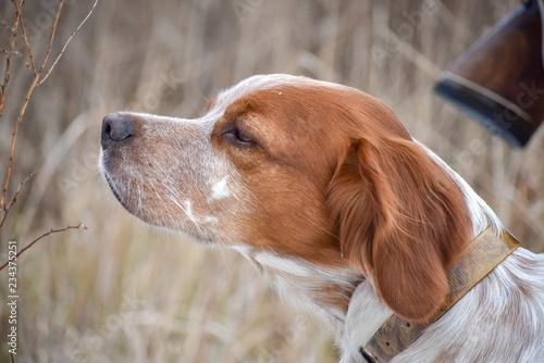Cuadros en Lienzo Beautiful dog