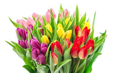 Bouquet fresh multicolor tulip flowers white background