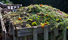 Organic Compost With Green Waste  -  Process Which Makes Natural Ferteliser From Food And Garden Waste.