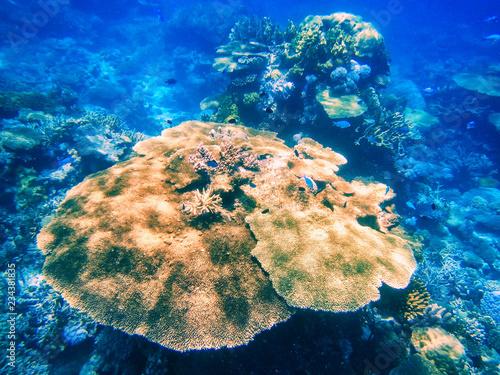fototapeta na lodówkę Coral reef in Somosomo Strait off the coast of Taveuni Island, Fiji