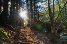 Sunrays Flaring Through Trees In Forest, Illuminating Path Through Pennsylvania Woodland