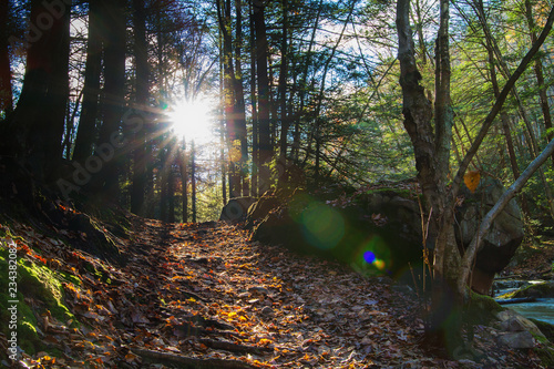 Fotografiet Sunrays Flaring Through Trees In Forest, Illuminating Path Through Pennsylvania