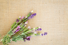 Bundle Of Fresh Lavender Tied With Jute String On Burlap Background