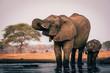 canvas print picture - Elefantenkuh trinkt mit Jungem am Wasserloch, Senyati Safari Camp, Botswana