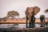 Krowa słoń z młodym przy wodopoju, Senyati Safari Camp, Botswana