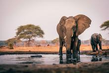 Elefantenkuh Mit Jungem Am Was...