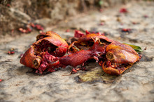 Fallen And Smashed Pomegranate Fruit In Autumn On Rocky Pavement.  Creating Picture Of Being Past Prime Focus On Fruit