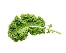 Fresh Green Organic Kale Leaf ...