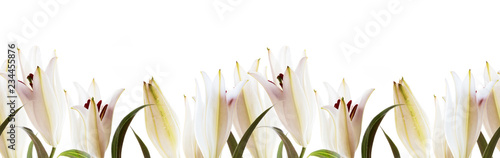 Lilies white flowers seamless pattern on a white Fototapet
