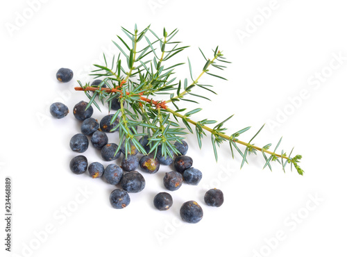 Fototapeta Cones and leaves of Juniperus communis isolated on white background obraz