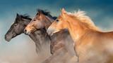 Horses herd portrait in motion with dark blue sky behind - 234469641