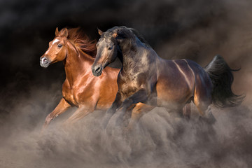 Two horse run gallop with dark background behind