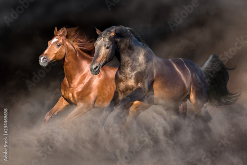 Two horse run gallop with dark background behind
