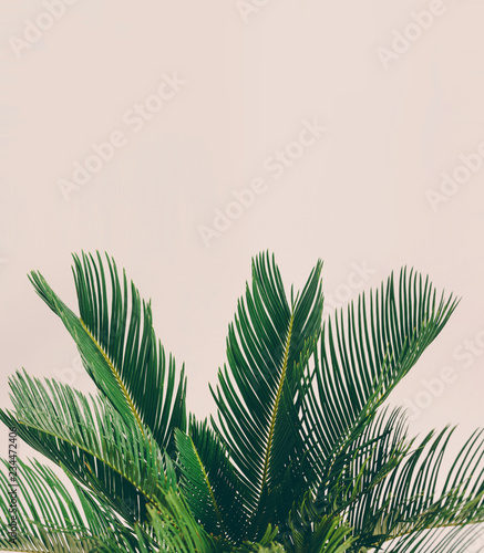 Leaves of tropical plant on light background.