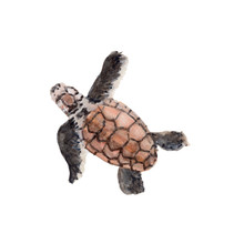 Baby Turtle Watercolor, Baby T...