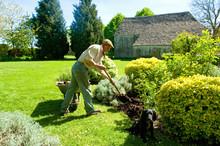 A Man Gardening, Using A Fork ...