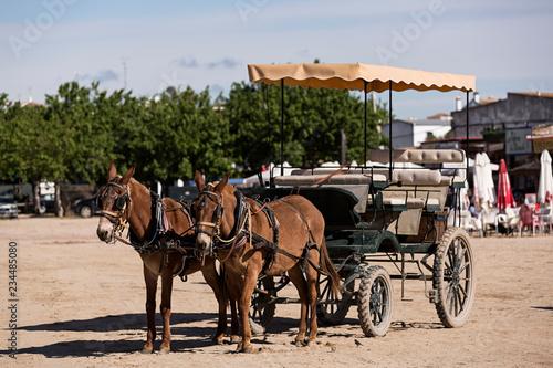Fotografie, Obraz  Coche de caballos en el Rocío, Huelva.