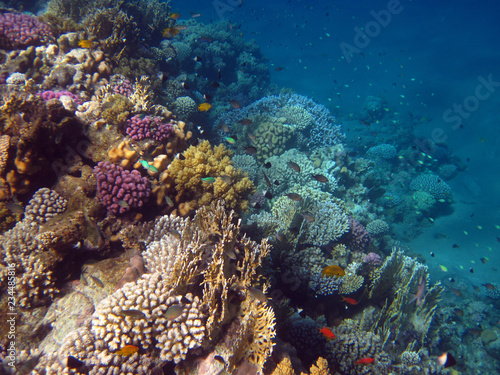 Poster Coral reefs fish in the sea