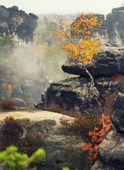 Amazing autumn colors of Saxon Switzerland. Small birch tree on large stones.