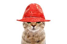 Portrait Of A Secretive Cat In...
