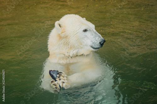 Foto op Canvas Ijsbeer Eisbär