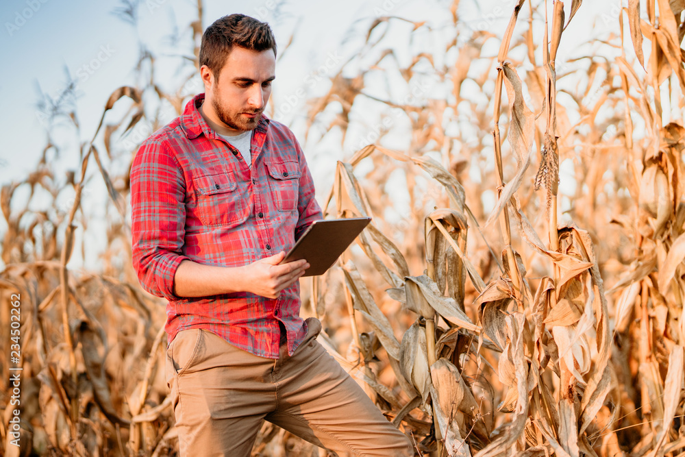 Fototapety, obrazy: Portrait of handsome farmer using tablet for harvesting crops. Farming equipment and technology