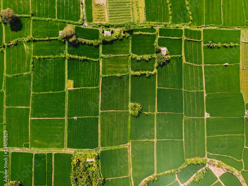 Poster Rijstvelden Aerial view of green rice fields. Natural texture in Bali island.