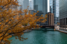 Golden Autumn Tree By The Chicago River