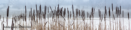 background. reeds in the winter on the river Fototapeta